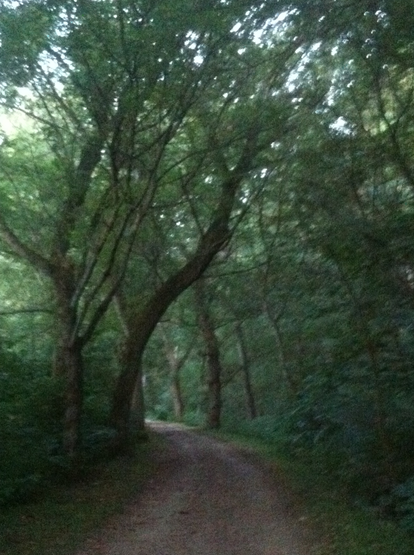 paving the way, setting out on your path of self-healing