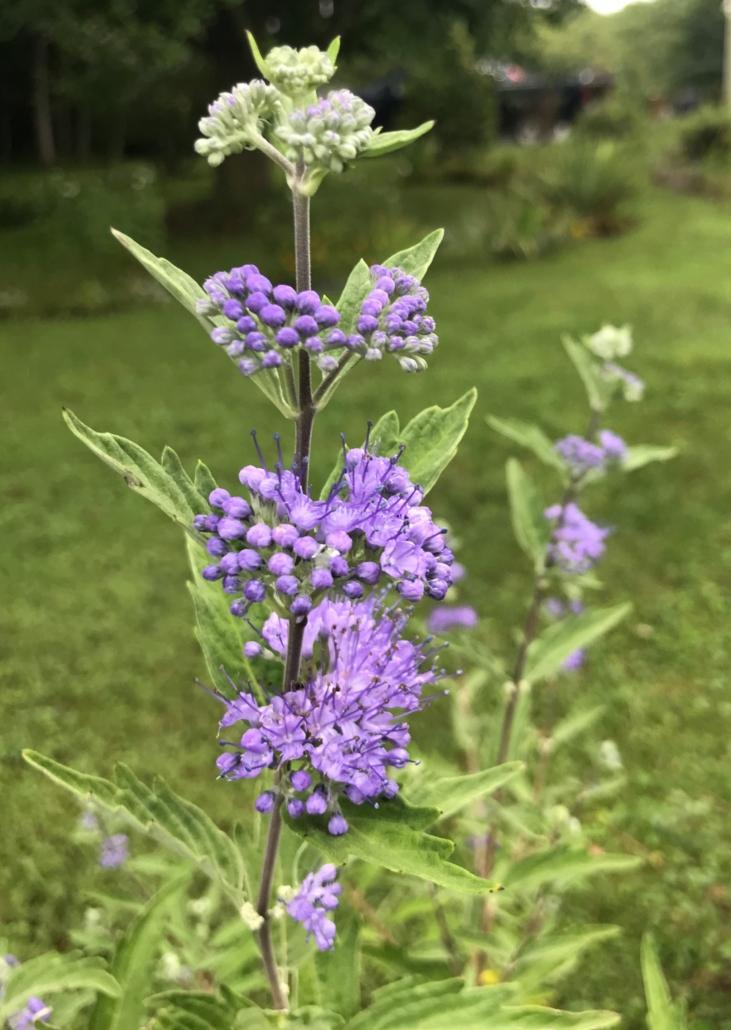 purple flowers give us self-healing energy