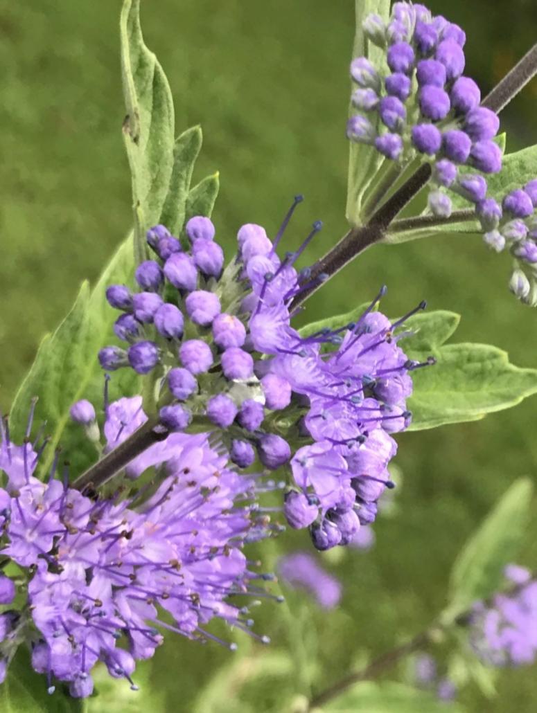purple flowers give us self-healing energies