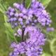 purple flowers are healing
